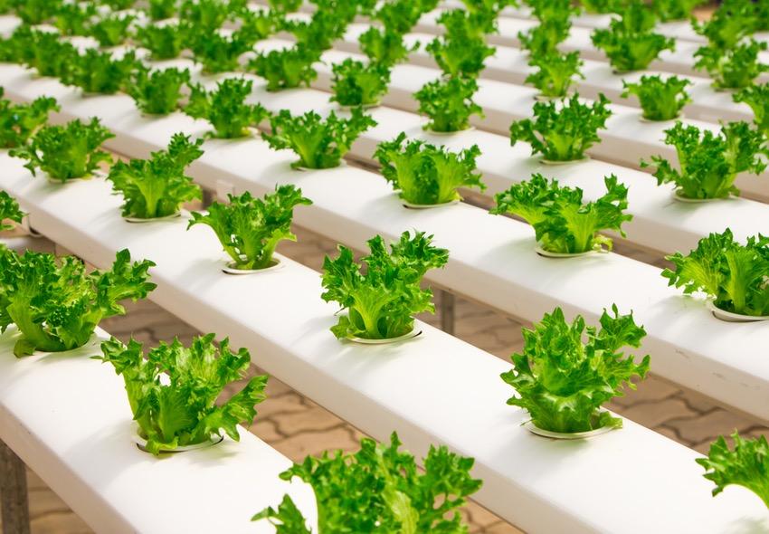 ¿Cuánto gana un Licenciado en Tecnología de los Alimentos al 2019?