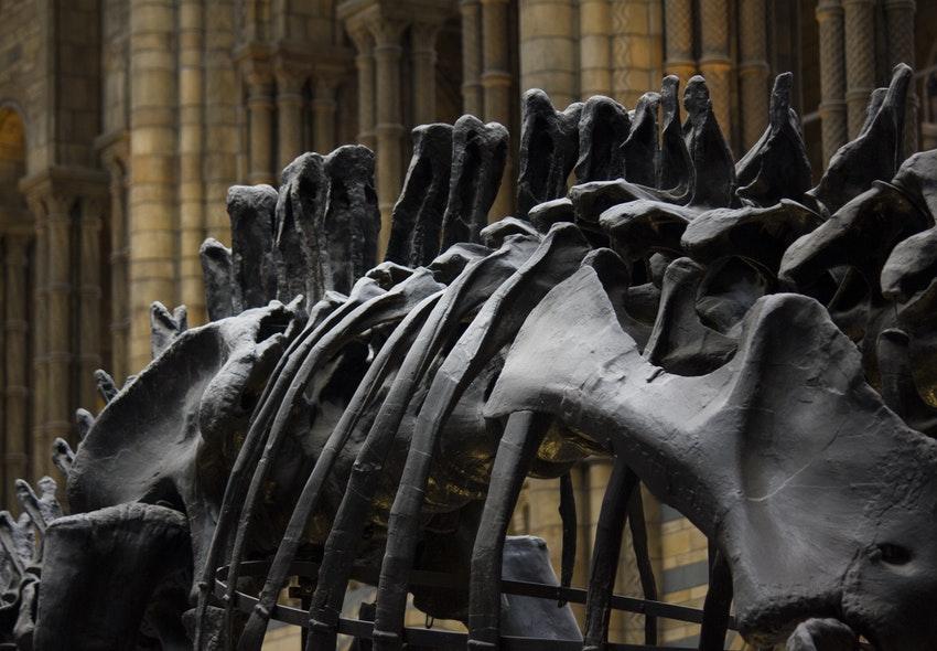 ¿Cuánto gana un Paleontólogo en 2021?